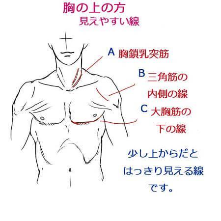 見えやすい筋肉線