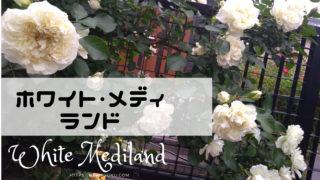 ホワイトメディランド