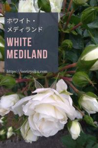 ホワイトメディランド1